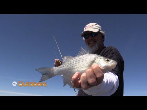 Fishing The White Bass Spawn At Utah Lake