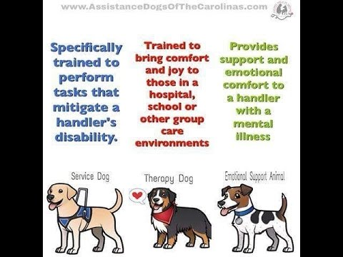 Image of: Pedigree Dogs The Cartoonist Group Emotional Support Animals Service Animals And Therapy Animal Youtube