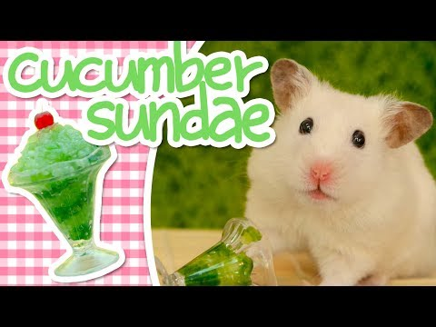 🥒 Cucumber Sundae | HAMSTER KITCHEN 🥒