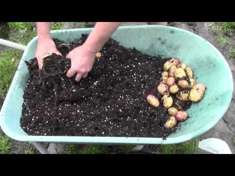 Harvesting & Succession Planting