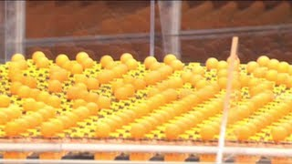 900 Mousetraps Unleashed with Science Bob on Jimmy Kimmel Live