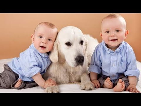 DOG showing love to Twins Babies –   Cute dog and twin baby are the best friend videos