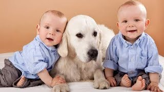 DOG showing love to Twins Babies -   Cute dog and twin baby are the best friend videos