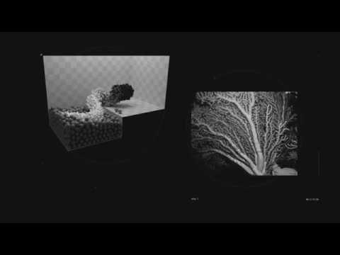 UNGLEE IZI - OP2S—OLLOPA [observation du phénomène physique stimulé] - (LDE 005 - 2016)