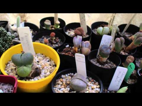 Aleck Selzer's succulent collection