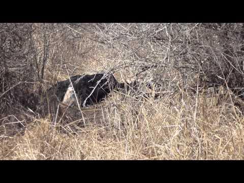 Tsavo Safari -