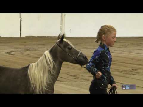 Roving Reporter - Things To Know: Miniature Horses
