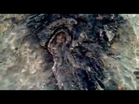 oldest fungi fossils found at village salkhan in sonebhadra district,state uttar pradesh, India.mp4