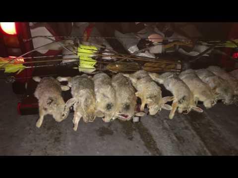 Rabbit Hunt With Recurve Bows Part 2