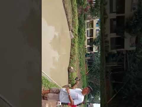 Umpan Khusus Untuk Ikan Lele Susah Makan Harian Lomba Strike Terus Youtube