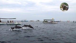 В поисках дельфинов Бали   фильм 22