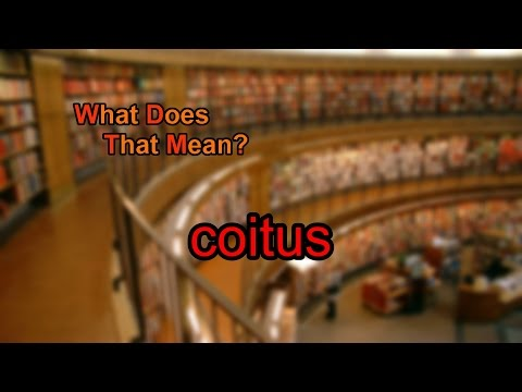 What does coitus mean?