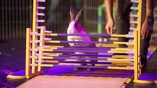 Talent Time: May 2015 (full) W/ Drumline, Rabbit Agility & Laughs