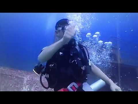 Borneo World Dive. Sipadan Sabah diving . call us +60138811769