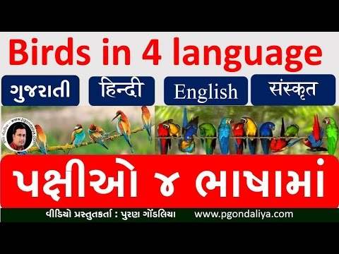 Birds Name  In 4 Language | Birds In Hindi|Sanskrit|English|Gujarati By Puran Gondaliya