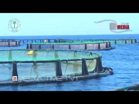 مشروع الاقفاص العائمة بشركة أسماك تبوك Fish farming in cages Tabuk Fish Company