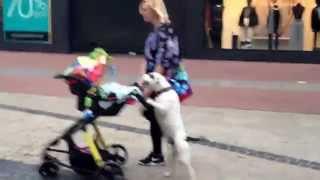 Nanny Dog Wheels The Baby's Stroller