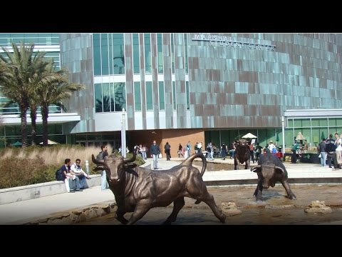 University of South Florida Tampa - 5 Things You Must Do On Campus