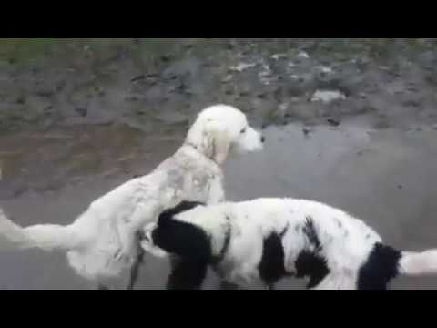 Toby @ 4 months old with Puppy Tilly - SWAMP PUPPIES! January 2017