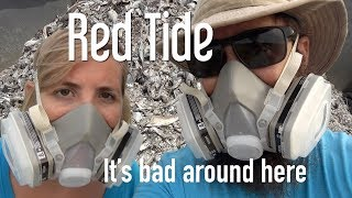 5. Siesta Key Beach The Reality of Red Tide The Boat Life Daily Vlog