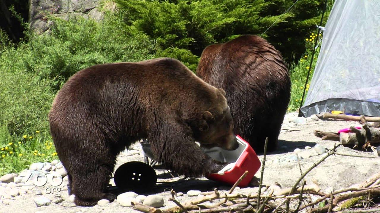 Gay bears camping