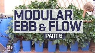 How To Set Up An Ebb & Flow / Flood & Drain Hydroponics Growing System - PART 6 Of 6