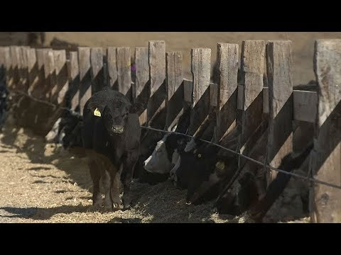 American cattle country looks to China for major investment in Montana