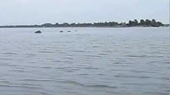Dolphins around my kayak Jacksonville florida