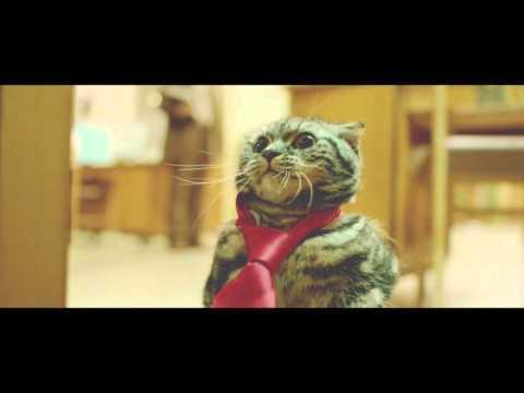 PusefinnBosscat