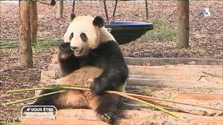 La visite du parc animalier belge,  Paira Daiza