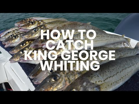How To Catch King George Whiting - Hooked Up Video