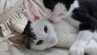 Первый день котенка в доме. Как приручить котенка.