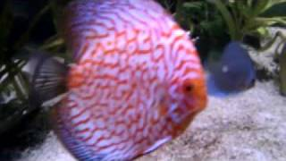 Design Aquarium 10-aquarium 370 Gall-240x60x100