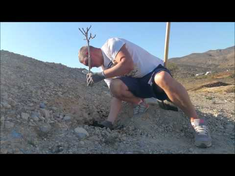 Part 8 Permaculture, project greening the Desert in Spain, in Almeria not far from Mojacar
