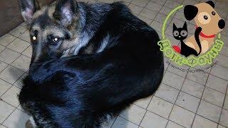 Почему собака грызет хвост (гоняется за хвостом)? Основные причины