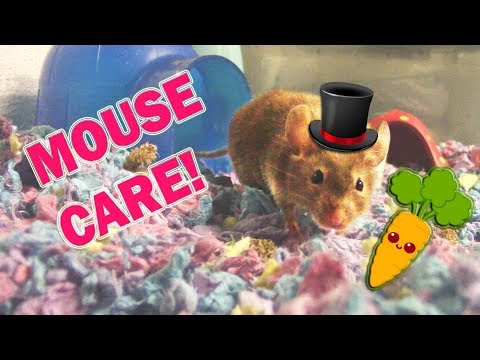 MOUSE CARE 101 (Everything you need to know)  -Pet Adventures