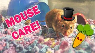 WATCH THIS BEFORE GETTING A PET MOUSE!
