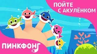Акулы на Пальчиках | Пойте с Акулёнком | Пинкфонг Песни для Детей