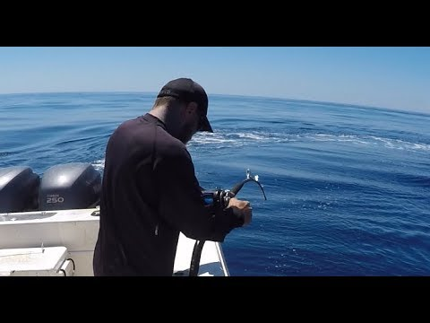 Offshore fishing with In the Zone charters- Huge Amber jack Limit, Mahi Mahi and more!