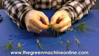 Preparing Eleocharis Parvula (Hairgrass) for planting in an aquarium