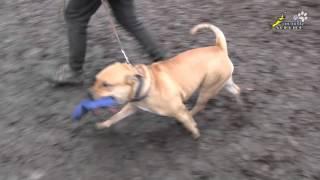 Содержание собаки в городе, проблемы воспитания и проблемы отношения населения к владельцам собак.