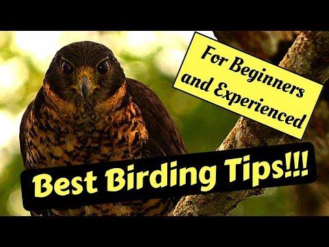 Bird Watching Tips (Birding)