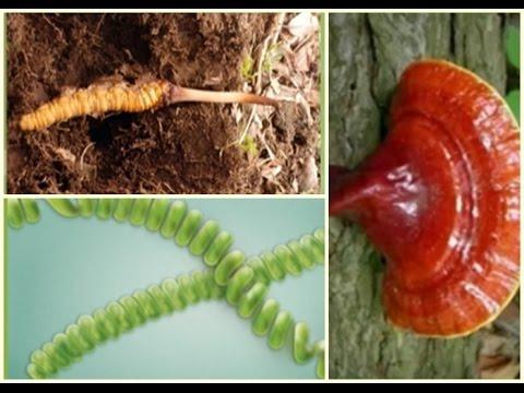 A Ganoderma gomba, Cordyceps gomba, és a Spirulina alga sejtszintű hatásai