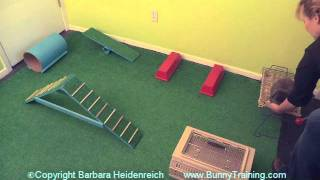 Amazing Rabbit Agility