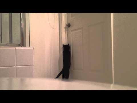 Cat Escapes Bathroom