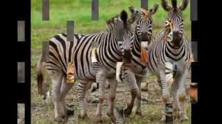 Zwierzęta Afryki :)