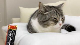 寝てる猫にチュールをあげたらこうなった笑