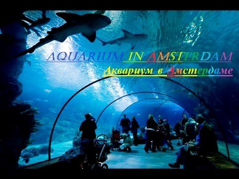 Аквариум в Амстердаме / Aquarium in Amsterdam