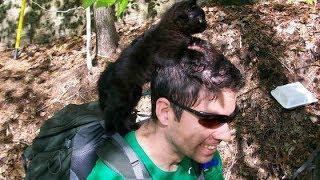 登山中に迷子の子猫に遭遇!一緒に歩いているうちに 離れなくなってしまい… thumbnail