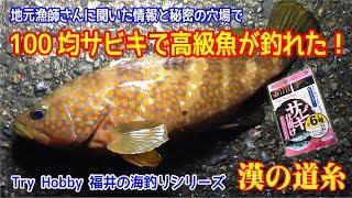 福井の釣り場 キジハタ釣り!100均サビキで釣り人魅惑のあこう釣行 越前エリア 2017年 夏